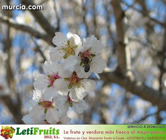 Galería fotográfica de Librilla - 18