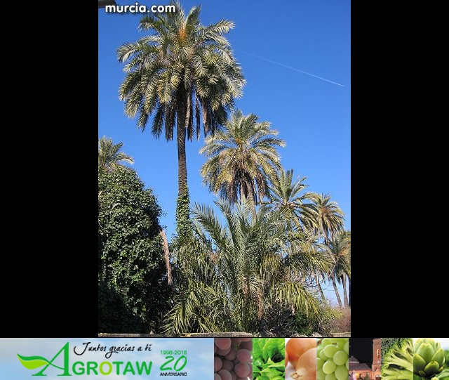 Galería fotográfica de Librilla - 36