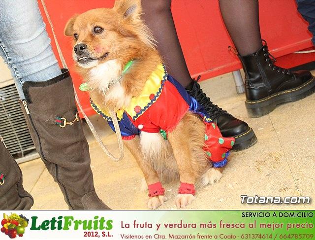 Concurso de disfraces de mascotas Carnaval de Totana - 10