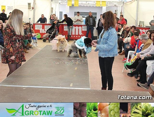 Concurso de disfraces de mascotas Carnaval de Totana - 33