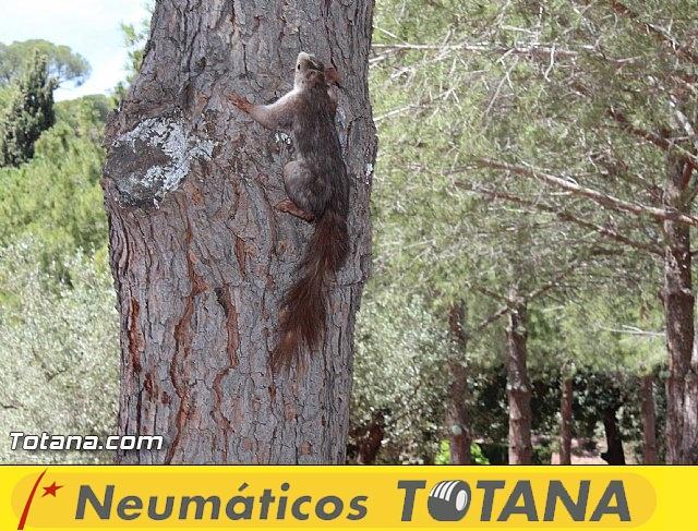Jornada de convivencia Hermandades y Cofradías - Domingo 19 de abril 2015 - 1