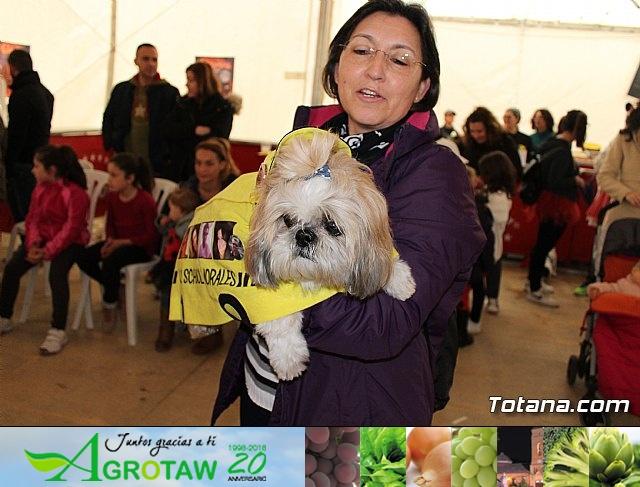 Concurso de disfraces de mascotas - Carnaval de Totana 2017 - 15