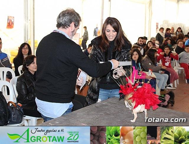 Concurso de disfraces de mascotas - Carnaval de Totana 2017 - 136