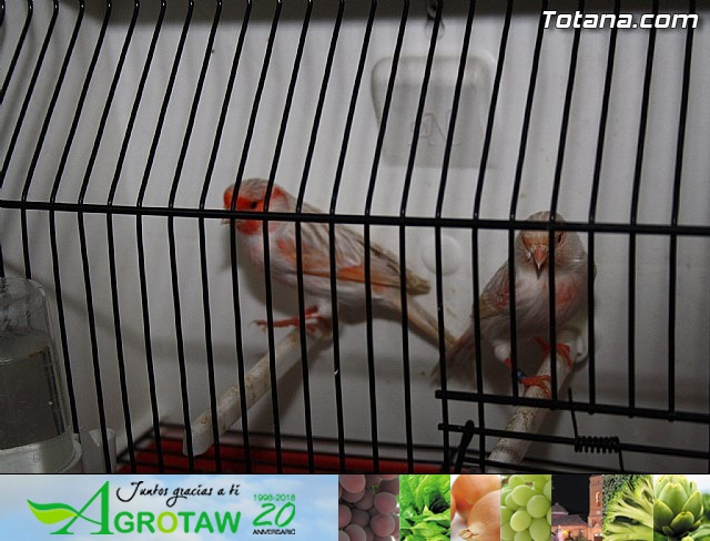 IX exposición ornitológica