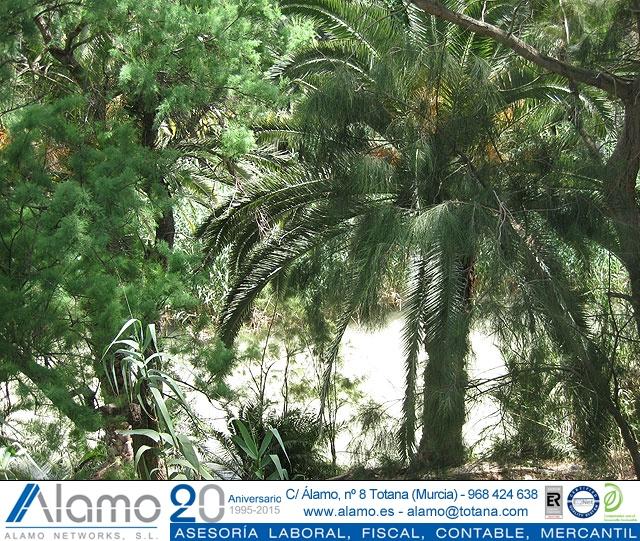 Viaje al balneario de Archena y Valle de Ricote - 18
