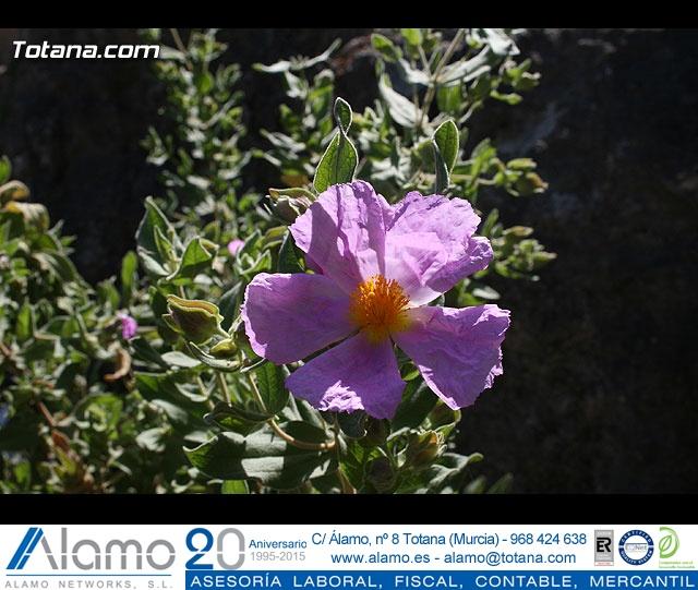 JORNADA DE CONVIVENCIA. HERMANDADES Y COFRADÍAS. 30/03/2008 - 21