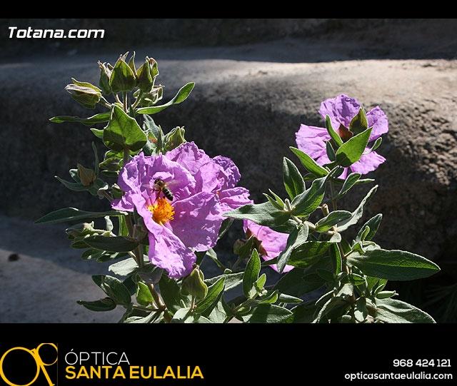 JORNADA DE CONVIVENCIA. HERMANDADES Y COFRADÍAS. 30/03/2008 - 22