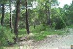 Foto Sierra Espuña 15