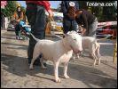 XII Concurso Canino Ciudad de Totana 2006