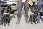 Guias Caninos
