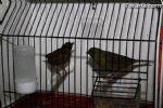 Expo ornitologica